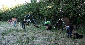 Появится ли в Шымкенте место для выгула собак?